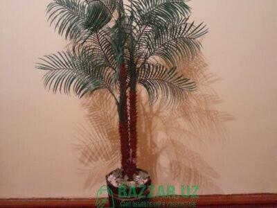 Пальма олмоқчимисиз, унда биздан осон ва тез олинг