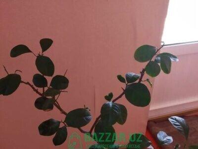 Растения (комнатные и садовые)
