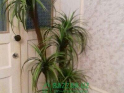 Искуственная дерева пальма