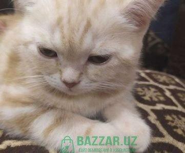 Ищем котенка-Mushugimiz yoqoldi