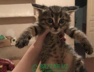 Срочно!Отдам котят в хорошие руки!