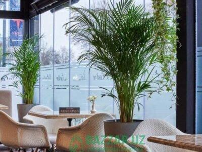 Растения для ресторанов